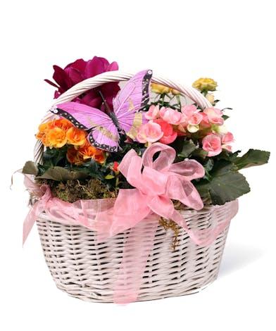 Butterfly Basket - Uniontown (PA) Neubauer's Flowers