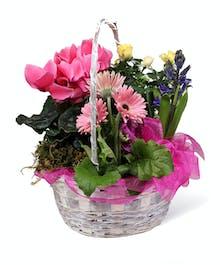 Neubauer's Easter Plant Basket
