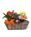 Petite Blooming Basket