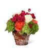 Blazing Beauty - Single Pot