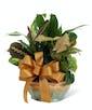 Ceramic Planter Garden - Deluxe
