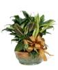 Ceramic Planter Garden - Exquisite