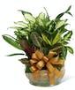 Ceramic Planter Garden - Premium
