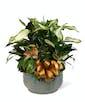 Ceramic Planter Garden - XL Premium