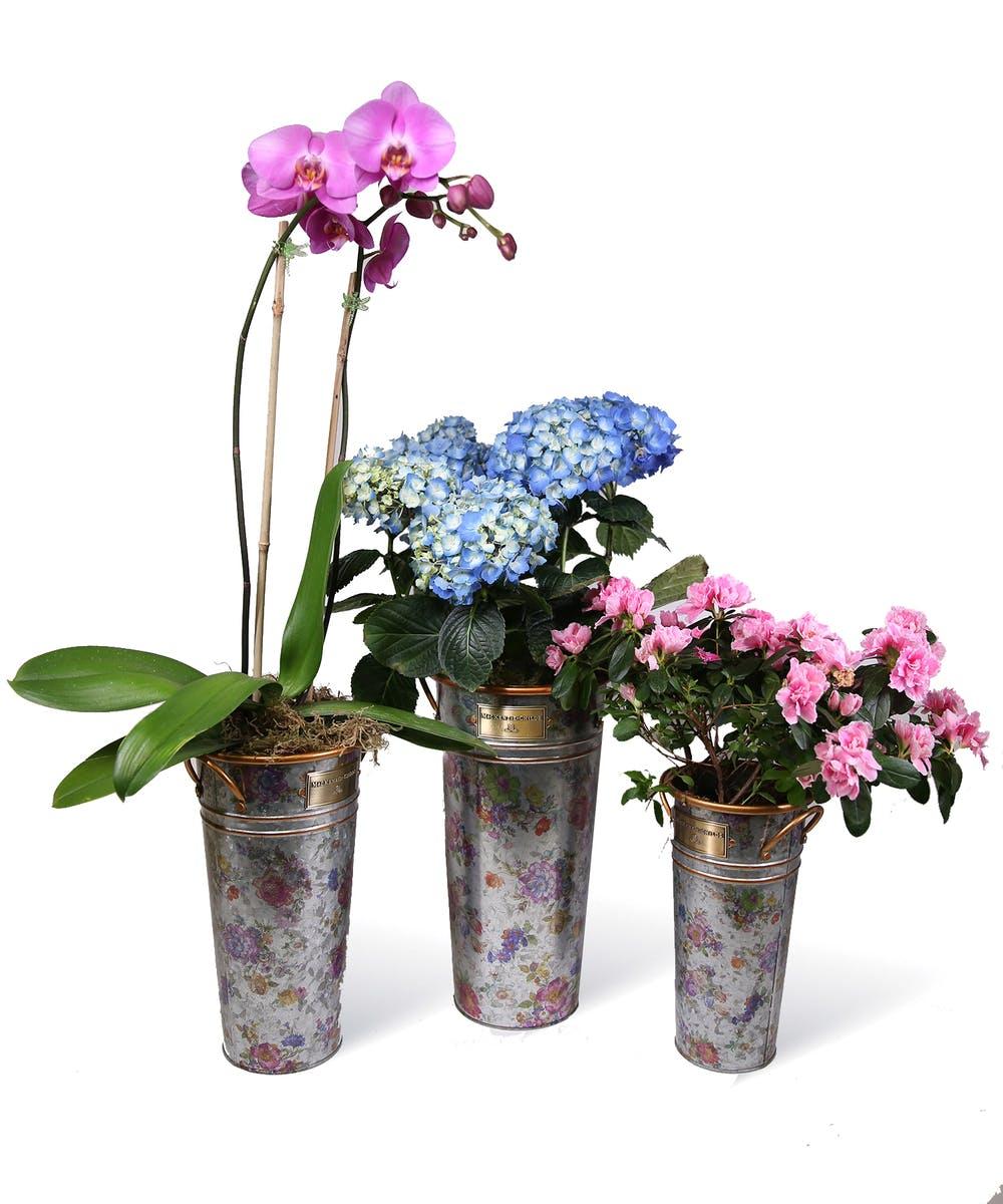 Flower Market Galvanized Bucket Set Neubauer S Flowers