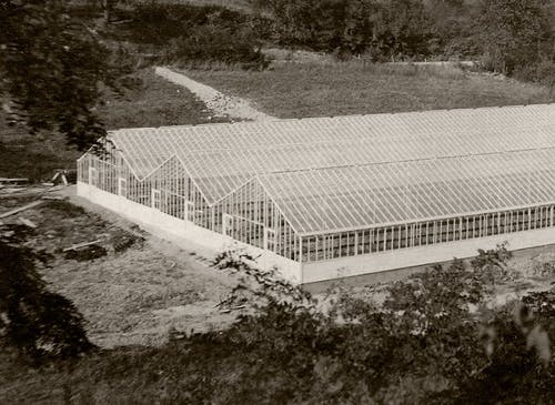 An aerial view of our triple-wide greenhouse, as seen in the early 20th century